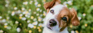 reacciones alérgicas en los animales