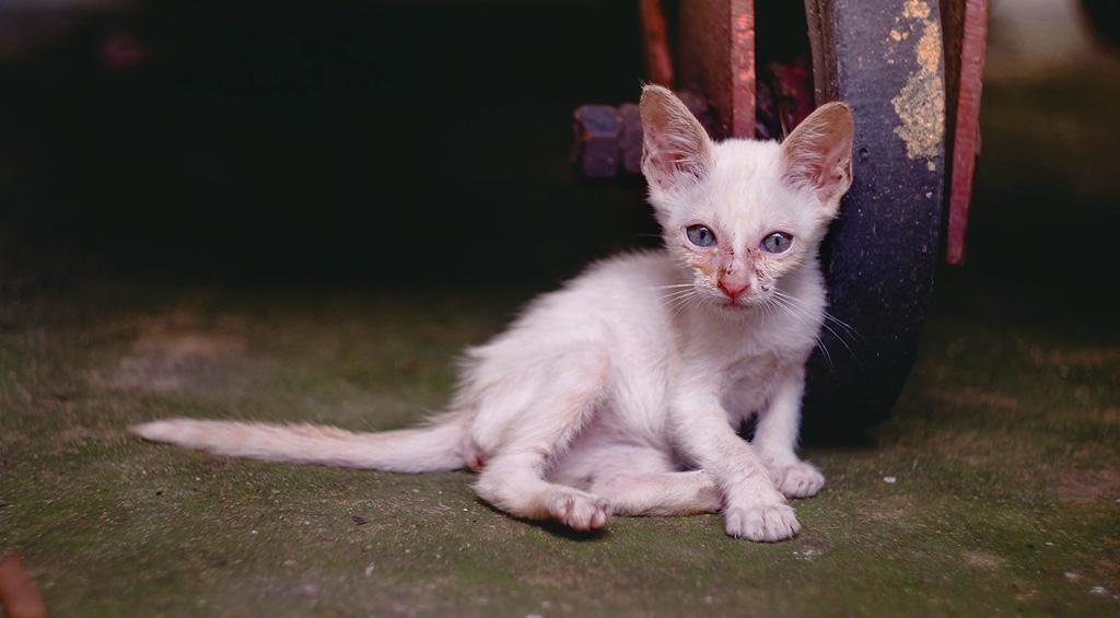 Un felino de colonia que vive expuesto a virus, inclemencias del tiempo, frío, lluvia y estrés, necesita para sobrevivir con un óptimo estado de salud, un mínimo de 17 a 20% de grasa